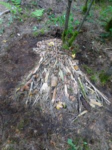 land based ephemeral art work -stag was inspired by the location and the materials found in the area where it was created
