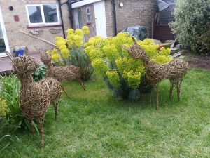 photo of willow deer