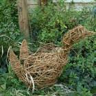 willow duck