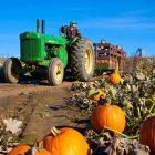 pumpkin_farm