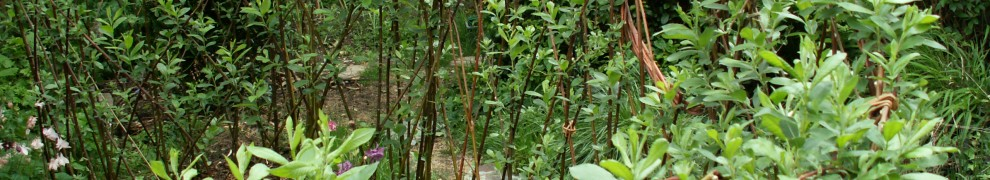 willow arbour and fedge grown